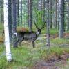forest_safari027