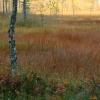 forest_safari030