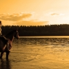 Horseback riding in the midnight sun
