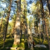 skogssafari-06