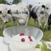Fjallkoyoghurt