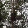 forest_safari062